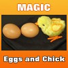 OSR Eggs and Chick